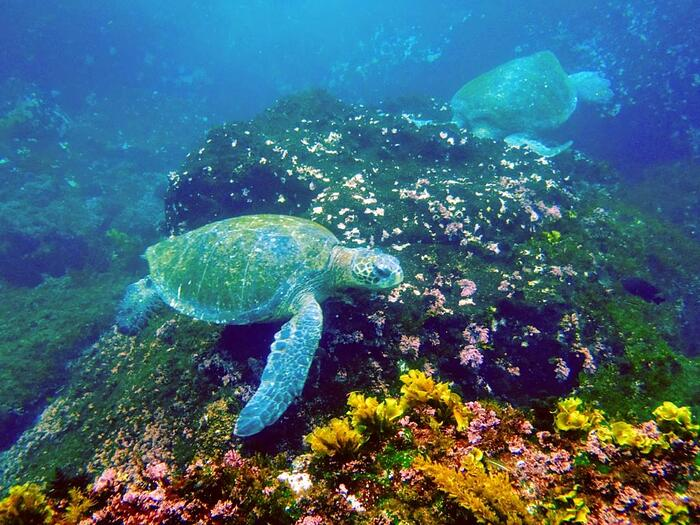 Galapagos marine life