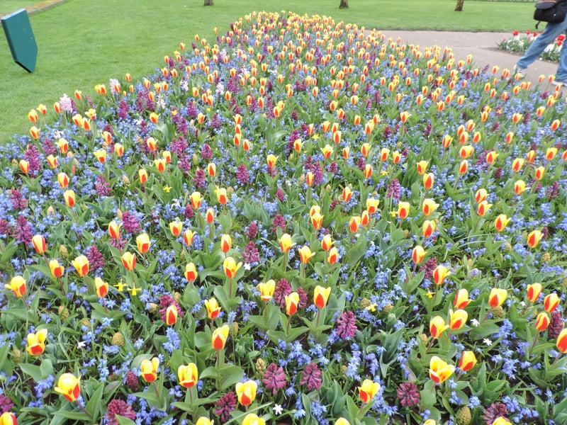april 6 tulips 2015