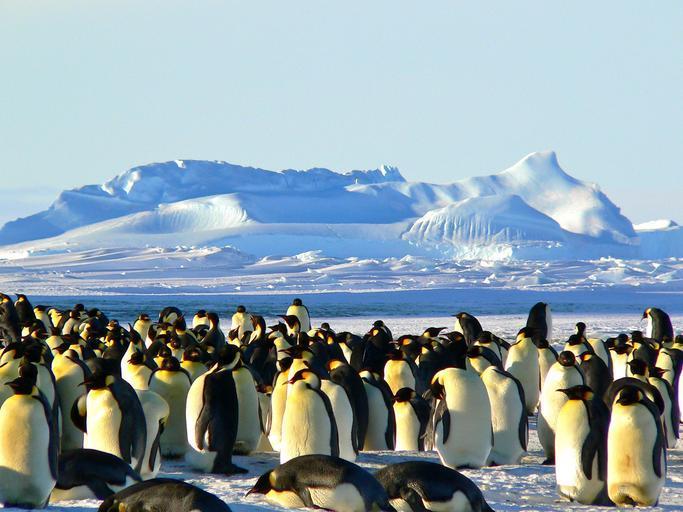 emperor-penguins-antarctic-life-429127