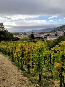 Hiking Chapoutier vineyard